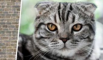 Хватай кота, беги к стене. Хозяева проверяют ум питомцев в тренде, и так выглядит «Ошибка 404» кошек