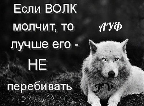 """Дмитрий Песков объяснил слова Владимира Путина, и его фраза как мем о волках. Услышав её, люди говорят """"ауф"""""""