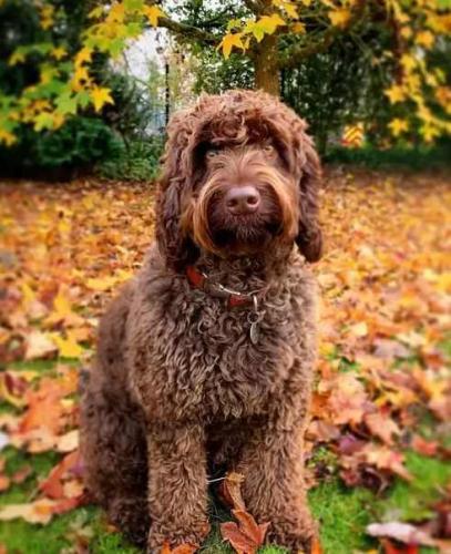 Видели когда-нибудь пса-психолога? А он уже здесь и одним своим взглядом готов решить любую вашу проблему