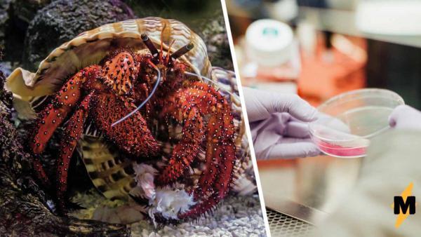 Кто самый дерзкий в мире животных? Учёные выяснили, как влияют на раков антидепрессанты, и мемы уже тут