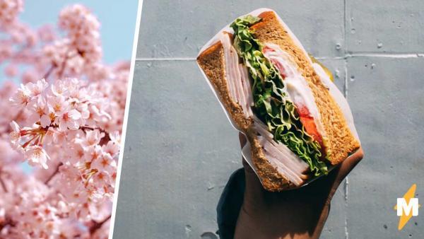 Учитель этикета показал, как правильно есть сэндвичи, и кринж вошёл в чат. Люди рады, что ели их неправильно