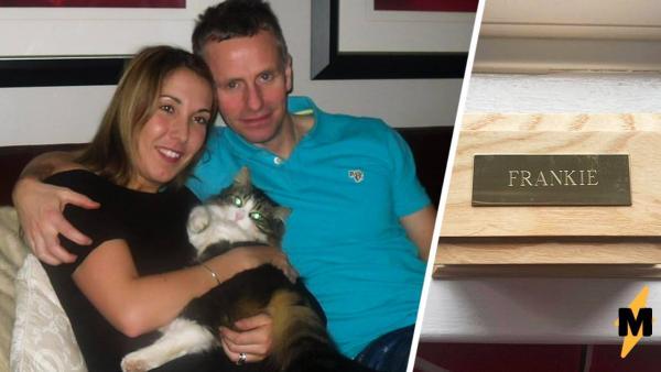 Семья 22 дня оплакивала кота, а услышав зомби-мяу, схватилась за голову. Кого тогда кремировали, они не поняли