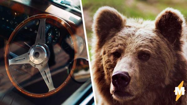 Идёт медведь, видит - машина стоит, сел в неё и... застрял. Было смешно, пока хозяйка не увидела последствия
