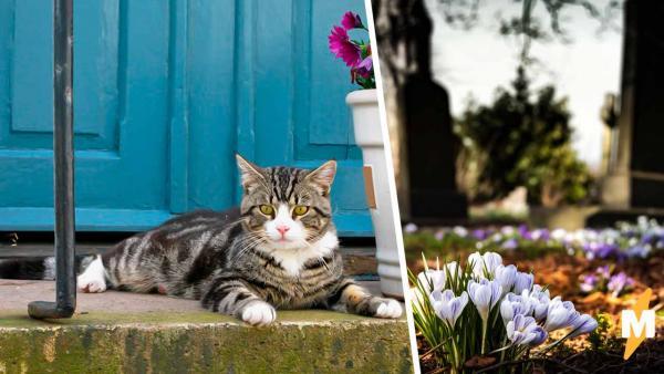 Хозяин похоронил кота, но рано лил по нему слёзы. Питомец оказался жив, а парню теперь лучше бежать от соседки