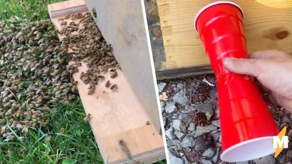 Миньоны, это вы? Пчеловод смастерил телефон и послушал крылатых. Звуки насекомых – лучшая озвучка для Pixar
