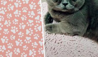 Познакомьтесь с впуклым котом Фёдором. Да-да, у него морда в форме половника, которым он черпает любовь