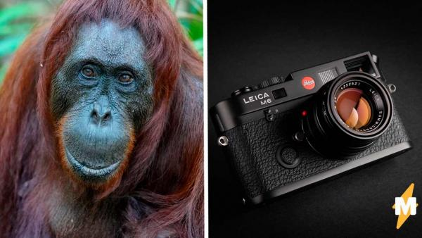 Фотограф сделал снимок, за который получил 155 тысяч ₽. Видели 3-D орангутанга? А он уже готов дать вам лапу