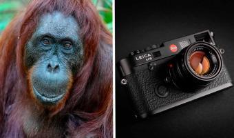Фотограф сделал снимок, за который получил ₽155 тысяч. Видели 3D-орангутанга? А он уже готов подать вам лапу