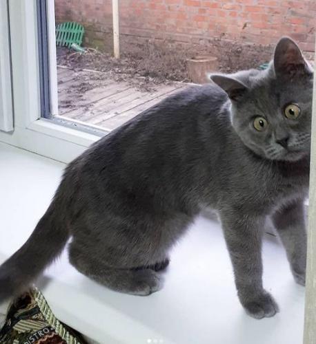 Познакомьтесь с впуклым котом Фредди. Да-да, у него морда в форме половника, которым он черпает любовь
