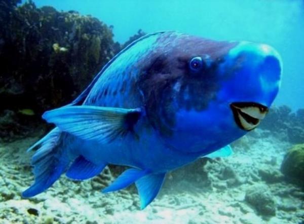 Рыбаки поймали морского жителя, а люди им - дайте номер дантиста этой рыбы. Ещё бы, так не блестят даже виниры