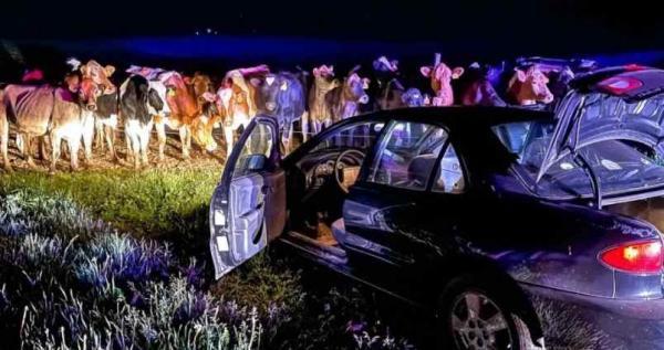 Водитель пытался скрыться от копов. Пришлось сдаться, ведь такую полосу препятствий не преодолеет ни одно авто