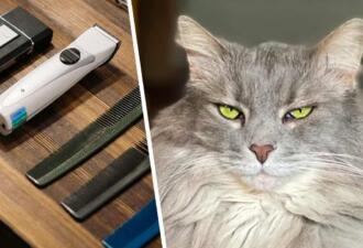 Хозяйка показала, почему нельзя брить налысо пушистых кошек. После стрижки её киса похожа на голого толстяка