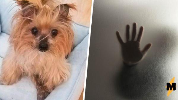 Хозяйка пришла разбудить собаку, а ушла седая. Если демон сна существует, то он выглядит как её питомец
