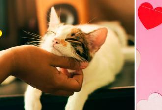 Хозяйка знает, как заставить кота сломаться за 5 секунд. Нужны лишь рука и камера, чтобы записать баг на видео