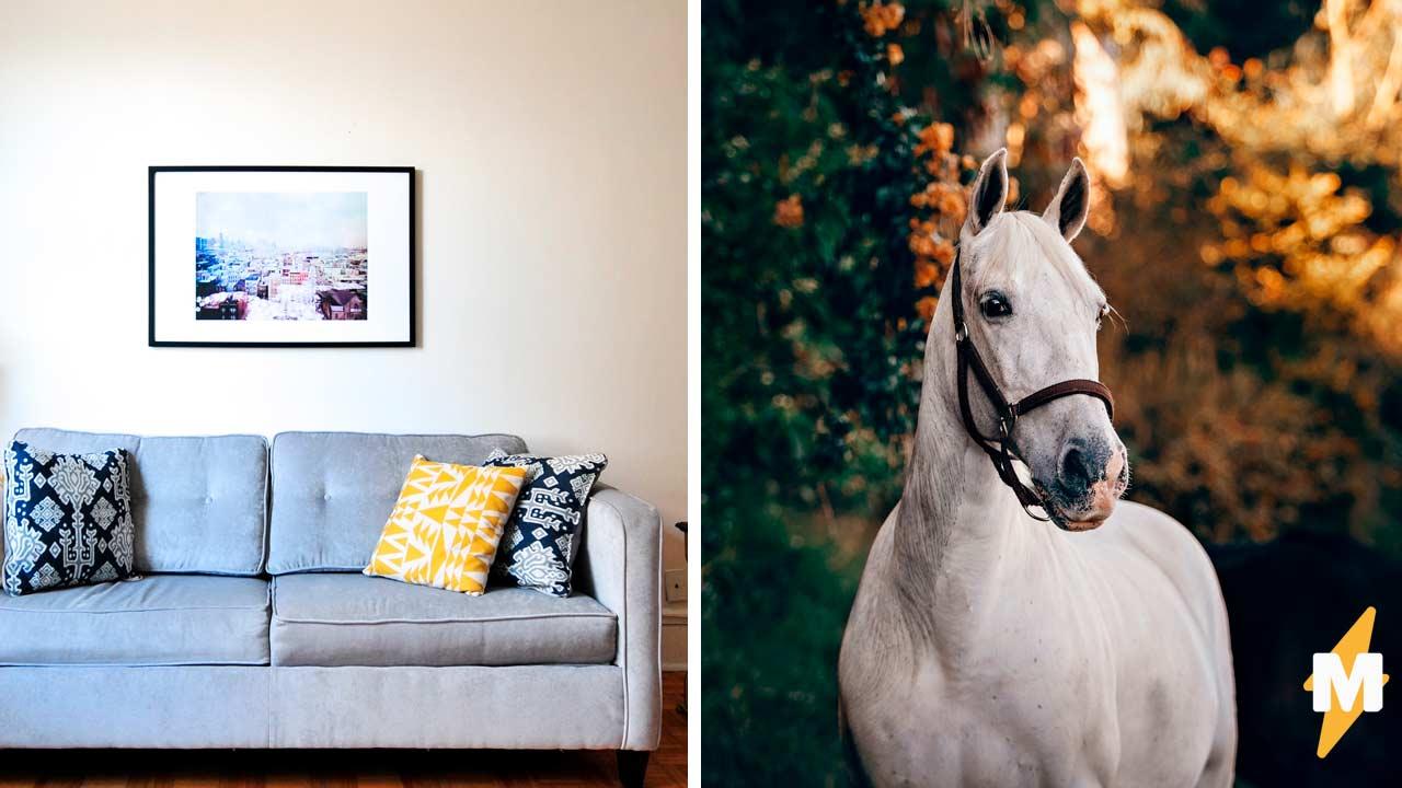 Домашних котов видели все, а как насчёт домашнего коня Никаких рыси и скачек, кроха Пибоди помещается в руках