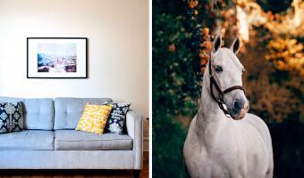 Домашних котов видели все, а как насчёт домашнего коня? Никаких рыси и скачек, кроха Пибоди помещается в руках