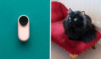 Хозяин надел камеру на кота перед уходом из дома. Так он узнал, почему питомец странно ведёт себя на людях