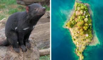Довольные зоологи спасли тасманских дьяволов ссылкой на остров. Через 9 лет они заглянули туда и попали в LOST