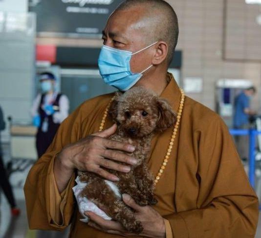 Сколько собак нужно для счастья? Буддийскому монаху — 8000, вам не показалось, и остальным зверям в храме тоже