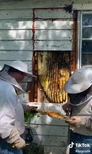 Рабочие содрали панель дома и поняли: хозяева там — не люди. Глядя на это, вы бы захотели съехать и налить чай