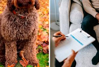 Видели когда-нибудь пса-психотерапевта? А он существует и одним своим видом спасает жизни двуногих