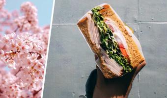 Эксперт по этикету показала, как надо есть бутерброды, и кринж в чате. Люди рады, что делали это неправильно