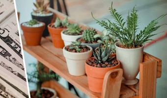 Ботаник купил комнатное растение и сломал стереотипы. Вы не поверите, сколько он заплатил за этот цветок