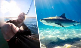 Сёрфингист ждал волну, а получил голодную акулу. Попробуйте сосчитать запикивания на видео с его побегом