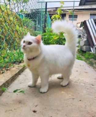 Кошка проживает лучшую из девяти жизней, но так было не всегда. Фото из первой говорят