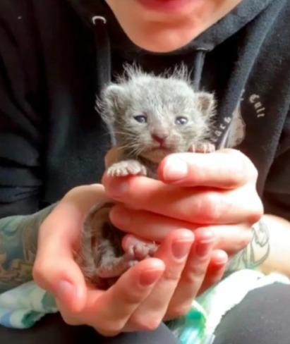 Вы не верили, а у котов всё же есть чувства. Волонтёр показывает крох из приюта, и их глаза - океанчики печали