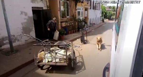 Пёс не оставил хозяйку одну в скорой и бросился в погоню. Осторожно, видео с кортежем заряжено на кражу сердец