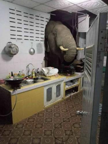 Семья не рада неожиданному гостю в доме. Кто-нибудь, объясните слону, что вход в дом — через дверь, а не стены
