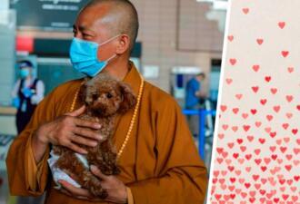 Сколько собак нужно для счастья? Буддийскому монаху хватило 8000 щенков, которые живут в его приюте