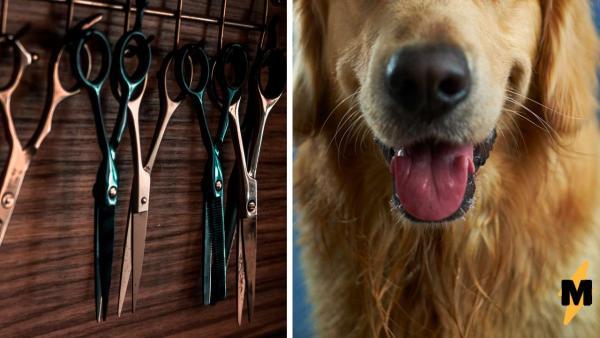 К грумерам попала собака, но её породу не угадает даже самый опытный собачник.