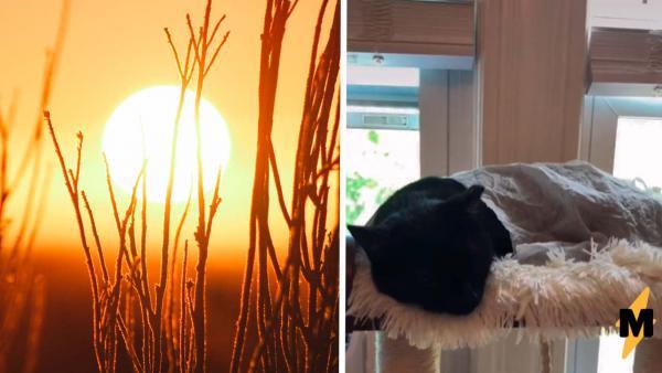 Как охладить животных в жару? Совет для хозяев стал трендом, а мы проверили его за вас (вердикт –лайк)