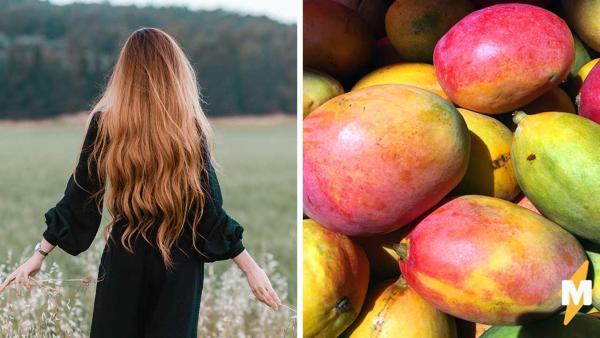 Почему не стоит срывать манго с дерева. Девушка показала, на что способен фрукт, и люди согласны на пестициды