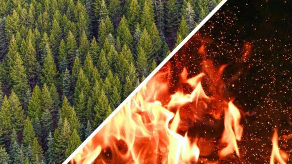 Что известно о лесных пожарах, которые уже почти три недели бушуют в Якутии