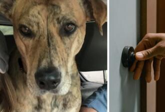 Потерявшаяся собака сама вернулась домой и позвонила в дверной звонок носом. Хозяева ждали её 18 часов