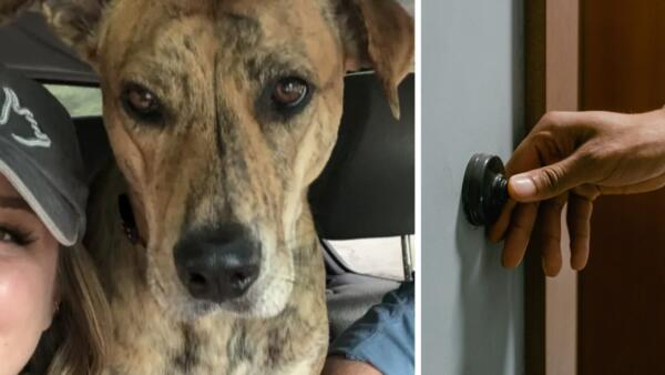 Хозяева потеряли собаку, но зря плакали. Один звонок в дверь - и пара узнала, зачем пёселю ноc на самом деле