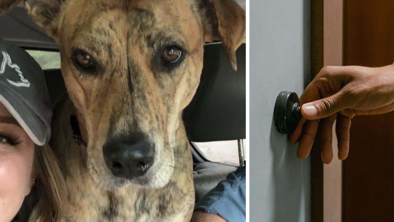 Хозяева потеряли собаку, но зря плакали. Один звонок в дверь  и пара узнала, зачем пёселю ноc на самом деле