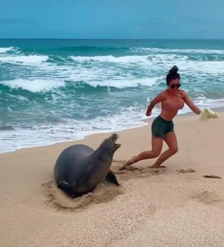 Туристка дотронулась до тюленя на пляже и жалеет. За это положен не только штраф, но и арест