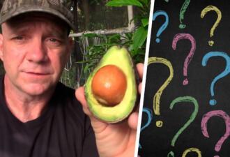 Посадил авокадо — получил фейл. Фермер уверен — из косточки никогда не вырастет вкусный плод