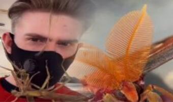 У блогера в квартире живут пауки, скорпионы и личинки. Ради видео он сажает их на своё лицо