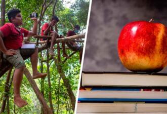 Дети Шри-Ланки учатся на деревьях из-за плохого интернета. Это почти мем «Школьник в болоте»