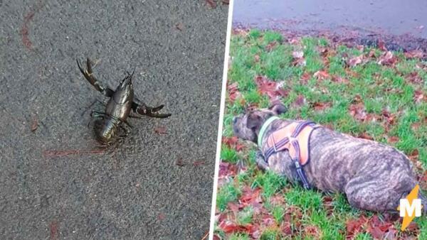 В парке Англии появились новые обитатели. Пёс нашёл скорпиона, а оказалось -- рака