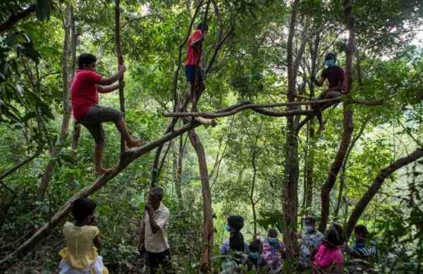 Школьники на Шри-Ланке случайно повторили мем «Школьник в болоте». Их занятия проходят на деревьях