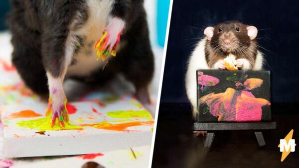 Домашние крысы создают картины, а хозяйка продаёт их на аукционе