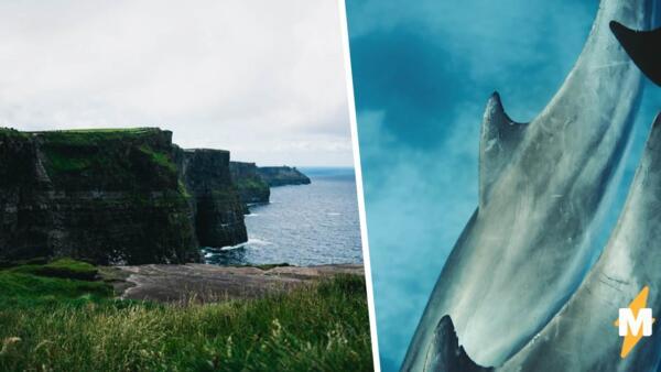 На побережье Ирландии рядом с отдыхающими проплыли две акулы