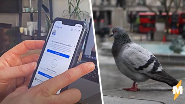 Британцы создали фейкового инфлюенсера голубя Перри и обманули рекламодателя