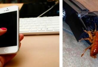 Пользователи соцсетей отправляют близким фото таракана в машине, чтобы разыграть их